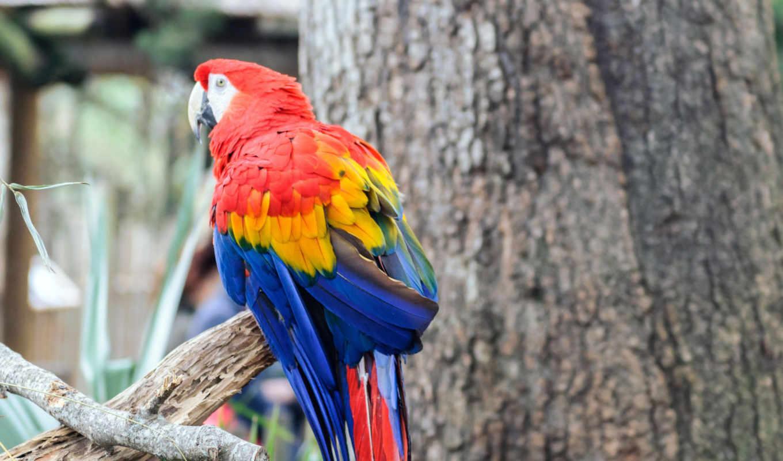 попугай, птица, color, голова, branch, ноутбук, телефон, birds, mobile, окрас,