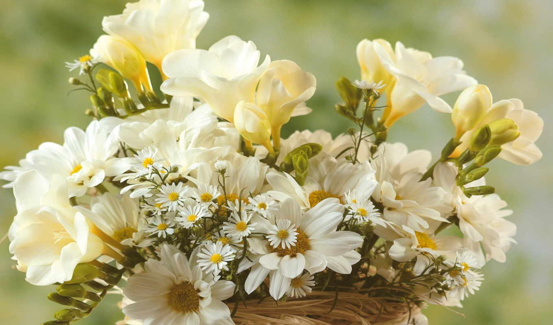 букет, цветы, белые, картинка, картинку,