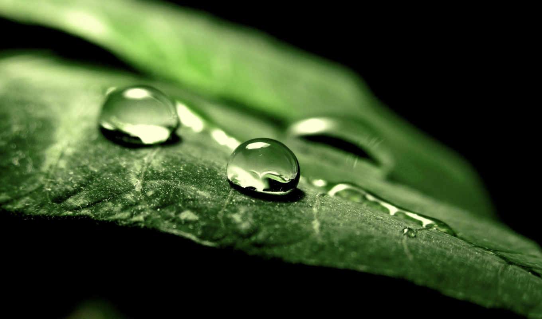 капли, макро, природа, зелень, листик, лист, вода, картинка,