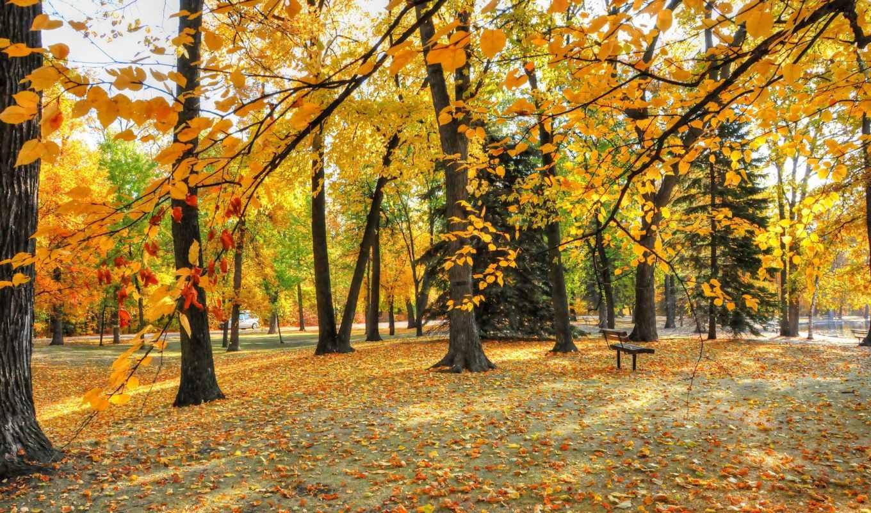 park, осень, деревья, you, листья, картинка, флот, природа, trees,