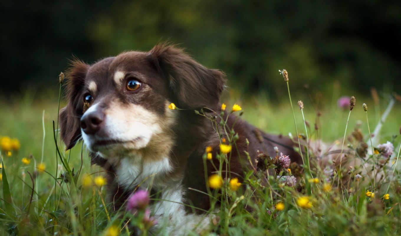 собака, природа, друг, можно, широкоформатные, животные,