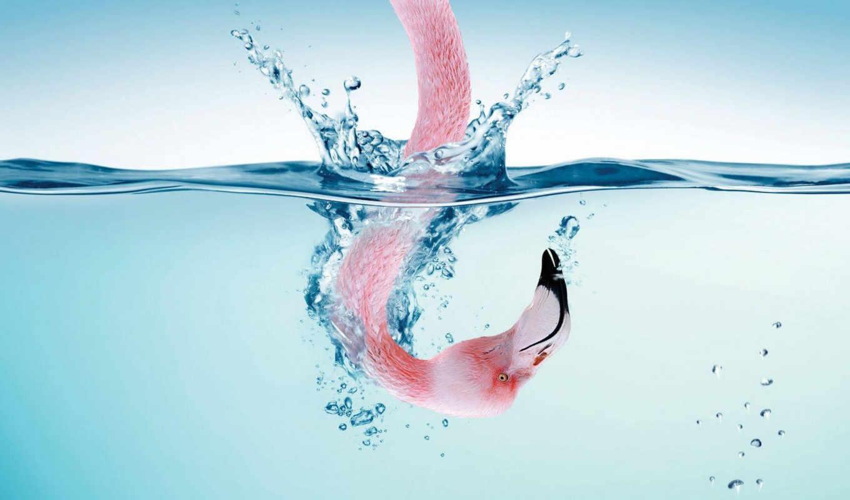 фламинго, голова, розовый, вода, yoram, iphone, aschheim, шея, free, flaming,