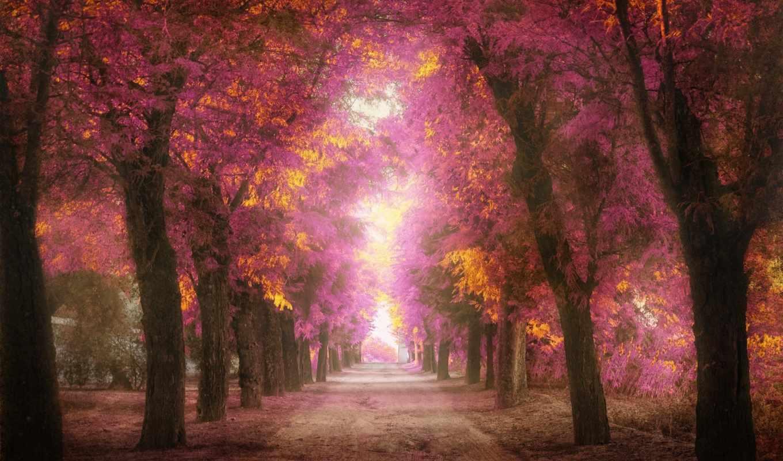 деревья, розовые, аллея, обработка, листья, парк,