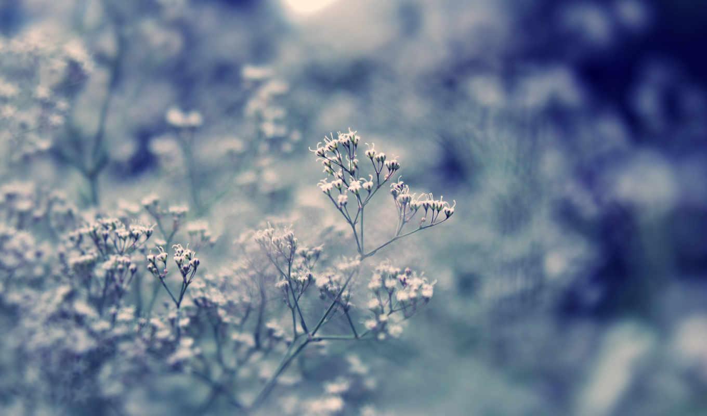 свет, трава, макро, видео, какая, блики, боке, цветочки, iphone,