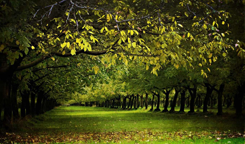 весна, деревья, дерево, природа, аллея, леса,