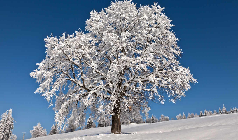 winter, дек, деревья, дерево, снег,