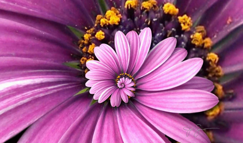 purple, цветы, flowers,