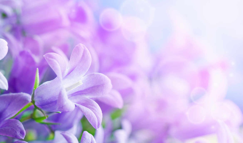 цветы, красивые, листки, лепестки, march,