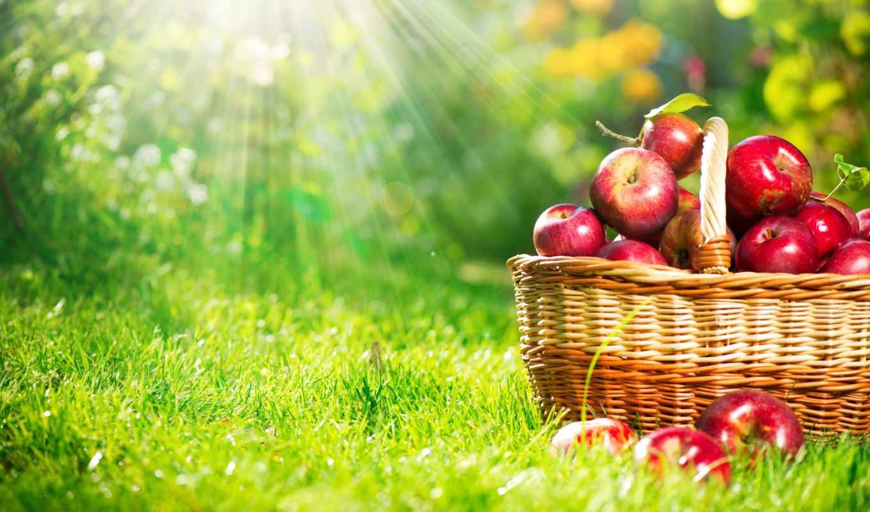 яблоки, фрукты, корзина, красные,