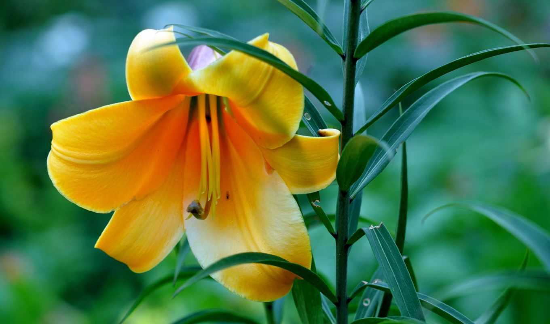 самые, цветы, красивые, июл, full,