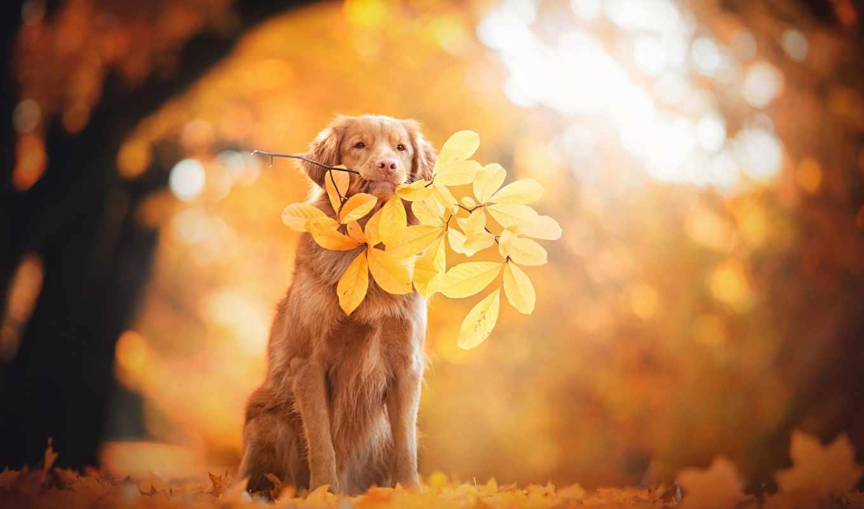 собаки, осень, flickr, favorites, друг, собака, explore, лучшая, загружено, dogs,