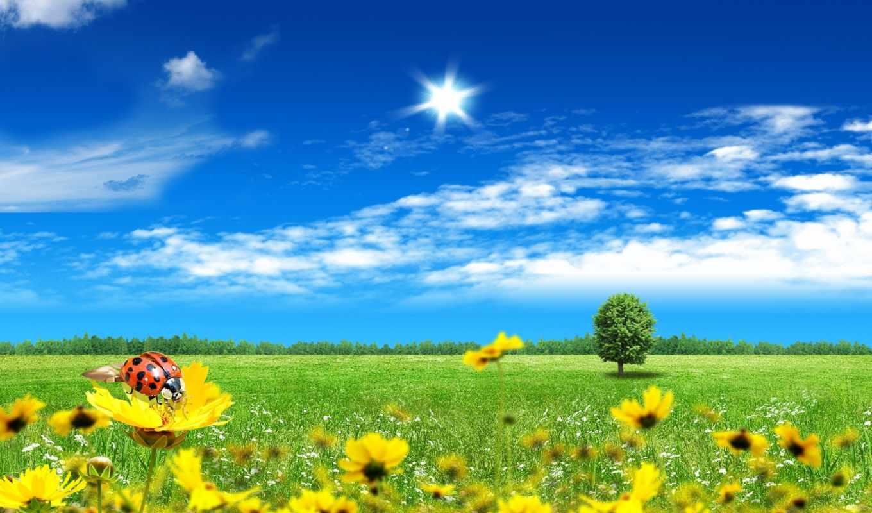 небо, цветы, коровка, трава, божья, поле, природа,
