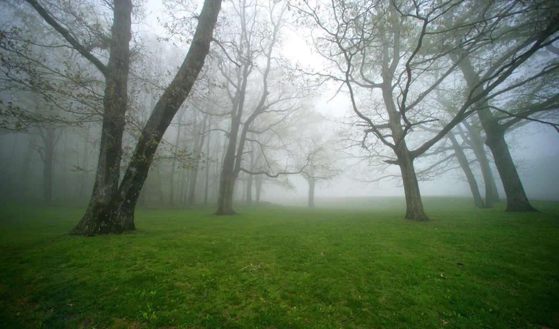 туман, деревя, лес, природа, осень, park,
