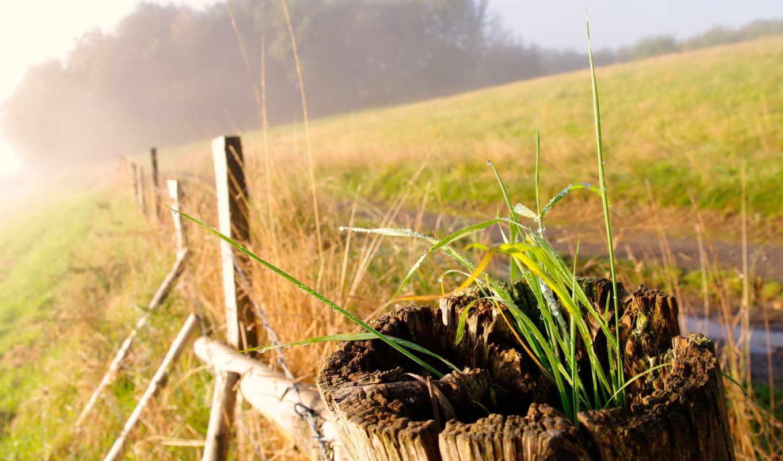 макро, трава, широкоформатные, цветы, лепестки,