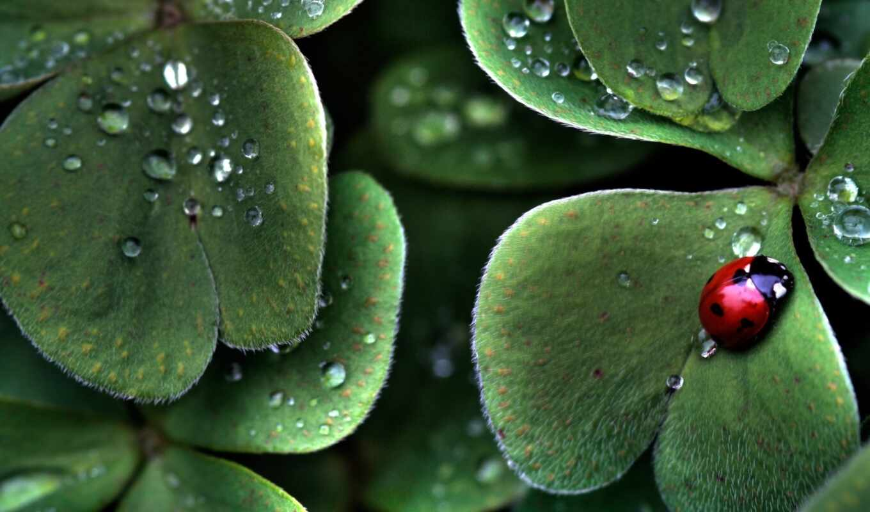 листья, зелёный, жук, смотрите, animals, ladybug, похожие, ladybugs, темы, смартфона, экрана, номером, монитора,