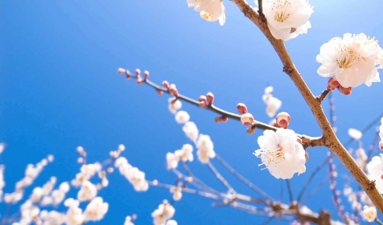 весна, цветы,