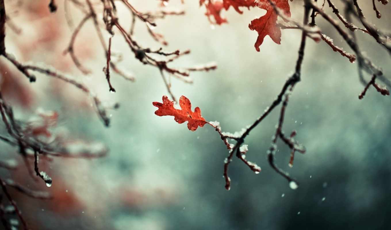 снег, природа, ветви, листья, осень, ветки,