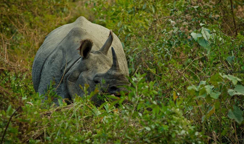 носорог,