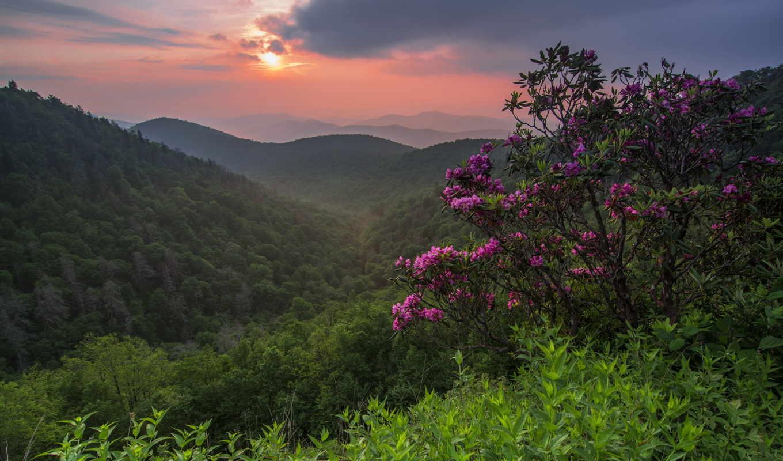 лес, густой, тег, гора, flowers, duff, hilary, природы, дымка,