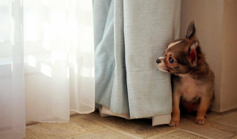 dog, wallpaper, free, download, wallpapers, deskto