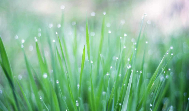ipad, fresh, grass, dew, retina, nature, iphone, vista, this, morning, нового, new,