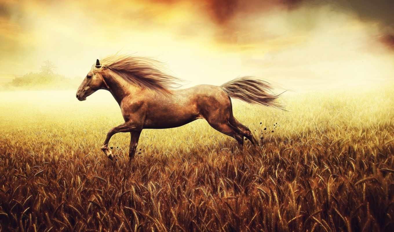 horse, поле, nature, бег, grass, картинку, картинка, духа, свобода, хвост, кнопкой, пшеница, best, кликните,