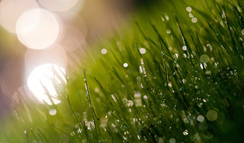 утро, роса, трава, макро, блики, свет, свежесть,