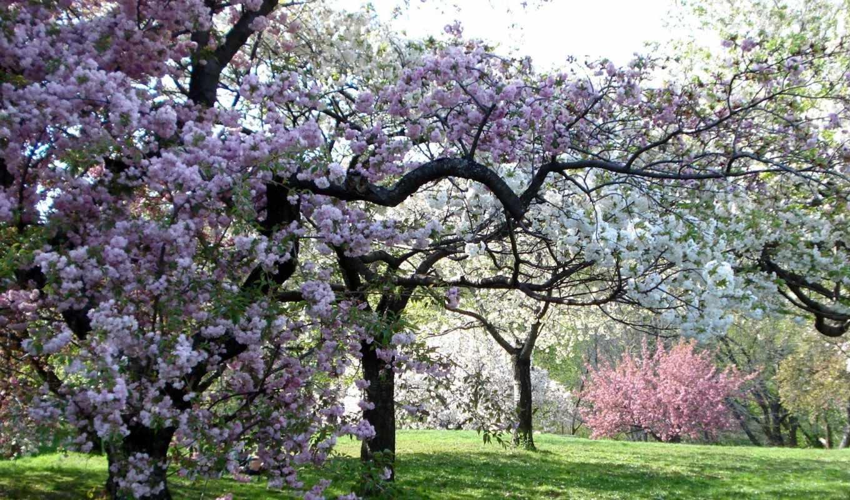 весна, garden, деревья, color, девушки,