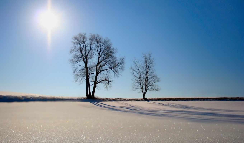 ,снег, деревья, поле, белый,