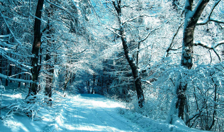 дорога, зимняя, лес, коллекция, winter, снег,