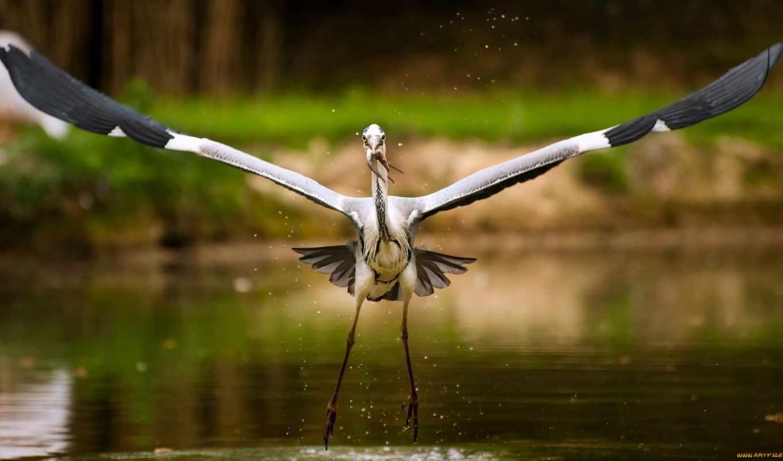 птицы, аистов, zhivotnye, stork, волк, long, birds, you, семья,