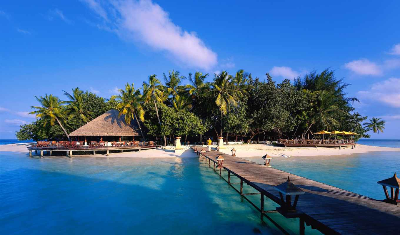maldives, angsana, resort, спа, ihuru, baros, banyan, мужской, дерево, hotel,