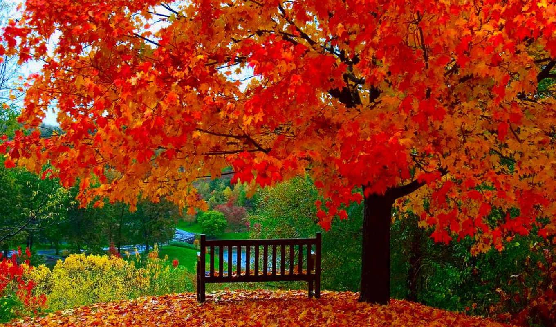 autumn, vipics, golden, от, осени, категория, album, стерео, природа, года, чтобы, времена,