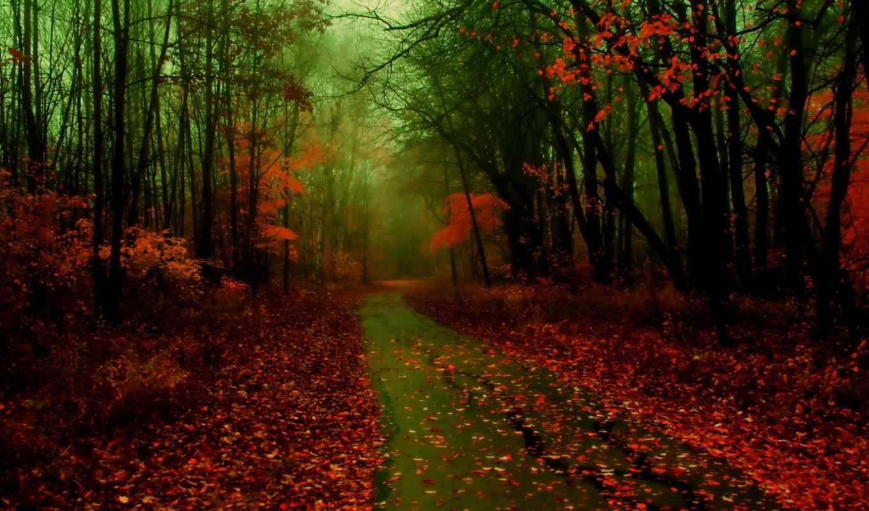 лес, осень, дорога, туман, природа, листья, дороги,
