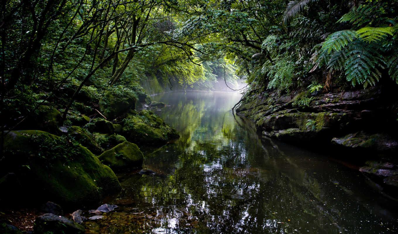 jungle, desire, природа, уровень, расследование, усатое, где, game, лес, кот,