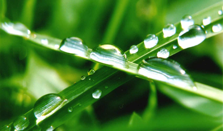 трава, кб, зелёная, капли, за,
