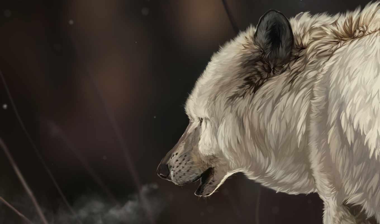 art, волк, снег, white, животные, winter, мех, морда,