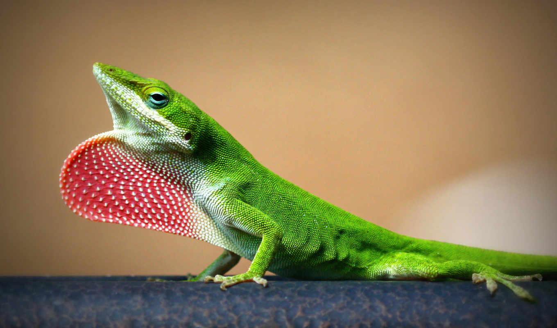 ящер, зелёная, природа, ветке, маленькая,