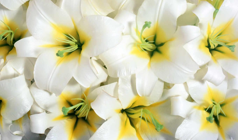 birth, dnee, lily