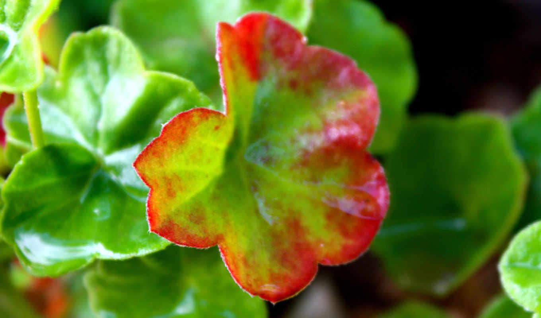 flowers, wallpaper, plants, hd, parte, to, листок, nature, иной, widescreen,