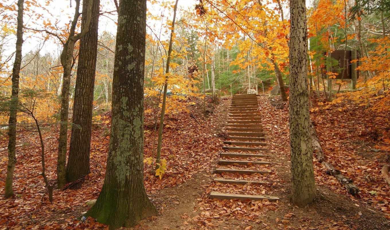 осень, деревья, лестница, resimleri, лес, www, картинка, super, fall, background, hight, manzara, радует, quality,