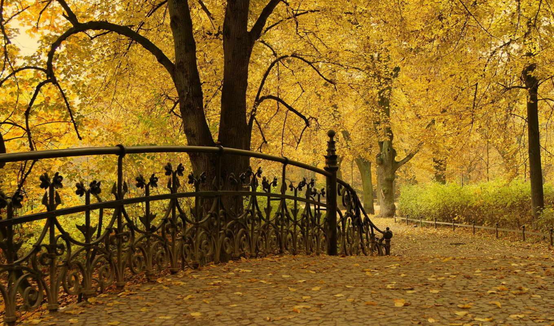 осень, парк, листья, деревья, картинка,