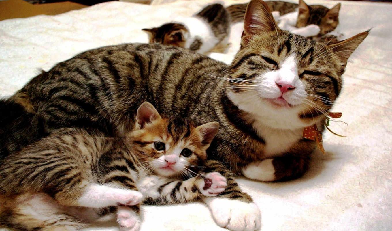 ,коты,котята,