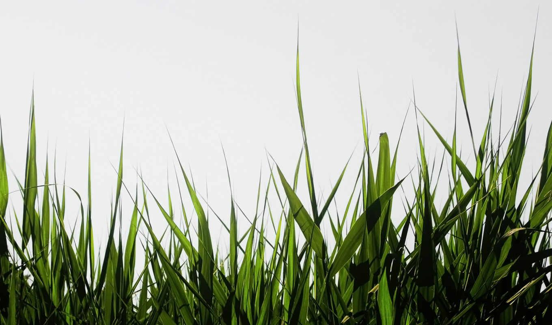 hierba, fondos, godzilla, para, corazones, pantalla, rosas,