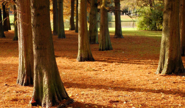 осень, пейзажи, apple,
