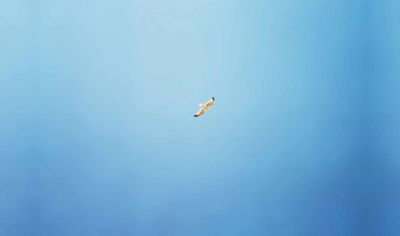 птицы, минимализм, небо, птица, чайка,