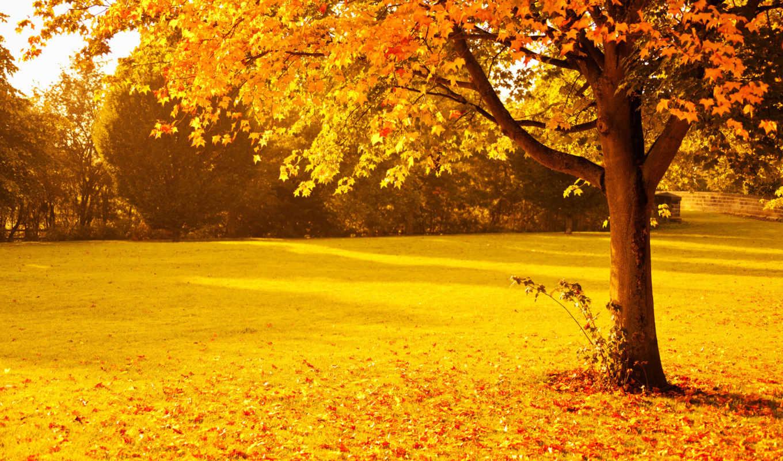 природа, осень, деревья, парк, листва, картинка,