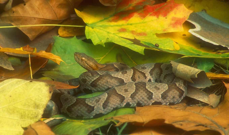 змеи, фотографий,