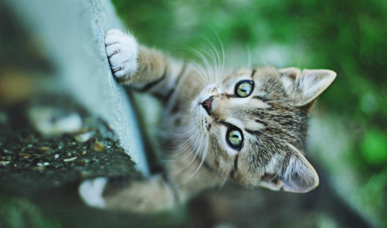 друзья, добавляйтесь, zhivotnye, кошки, пост, cute, die, качества, страница,