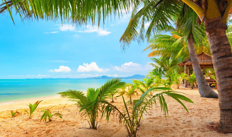 пальмы, пляж, природа, море, песок, тропики,